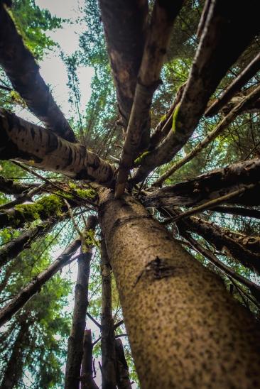 hayley wood-49